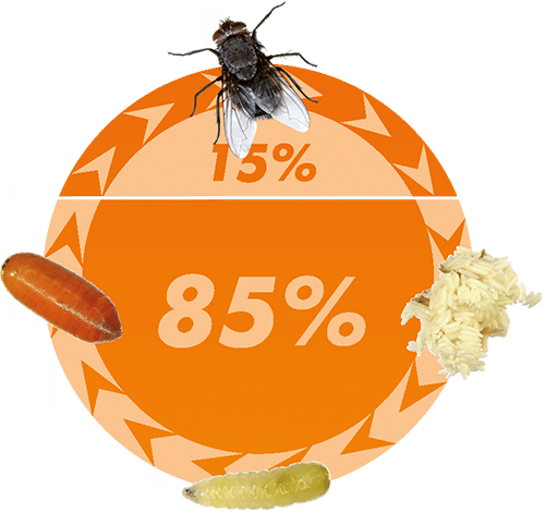 Lifecycle Organic Fly control